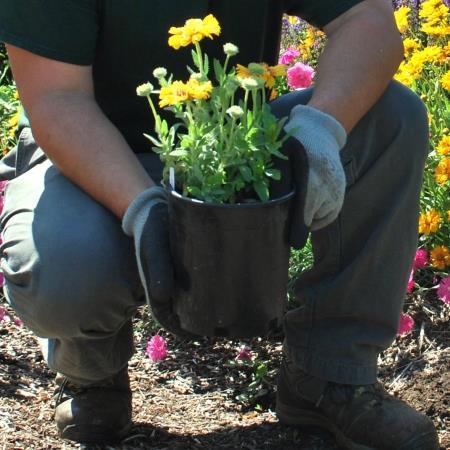 Plant Health Management CC