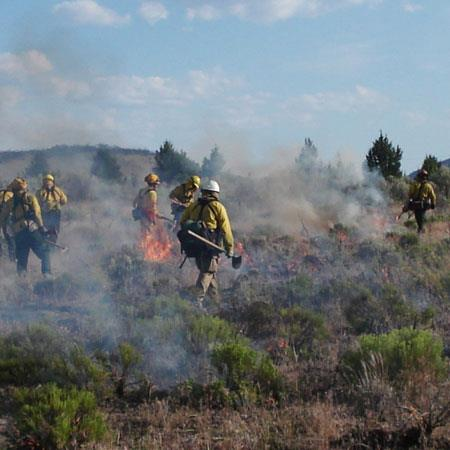Wildland Fire Forestry CC